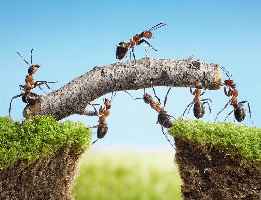 Qual é o valor que a cooperação aporta para a empresa?